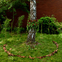Land Art ala Andy Goldsworthy